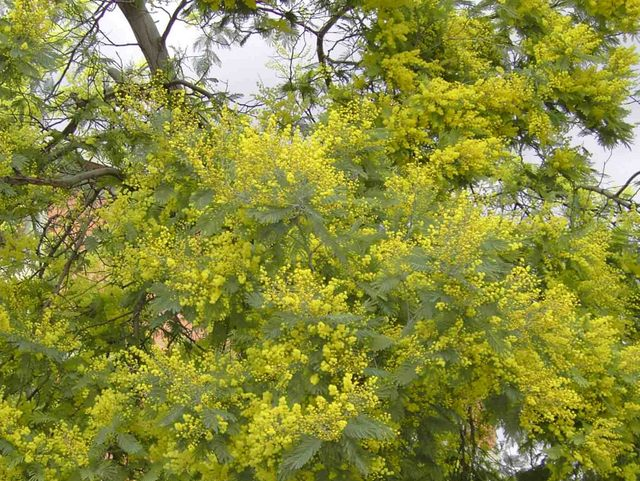 Spring flowers and flowering trees french moments - Trees that bloom yellow flowers ...