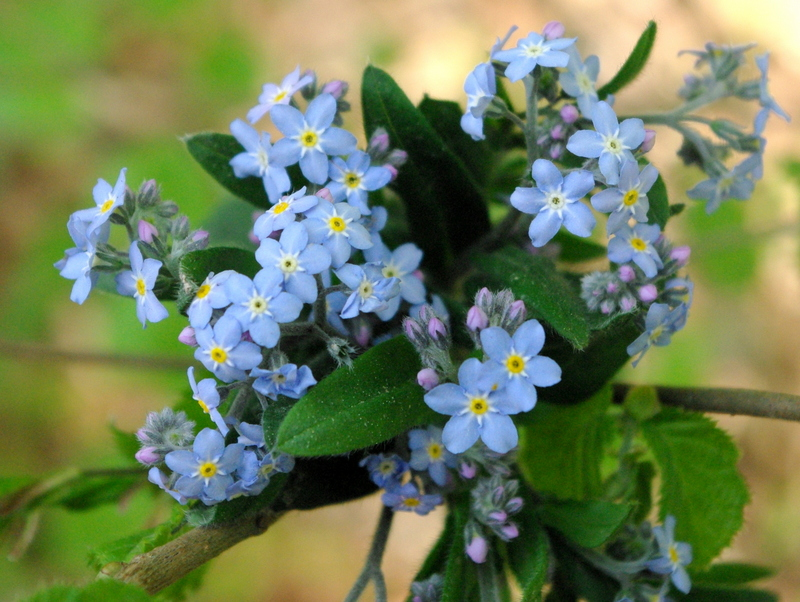 Spring flowers and flowering trees - French Moments