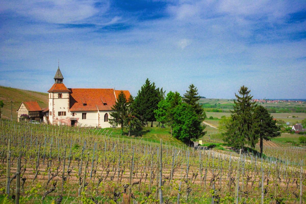 Alsace Wine Route - Dambach-la-Ville © French Moments