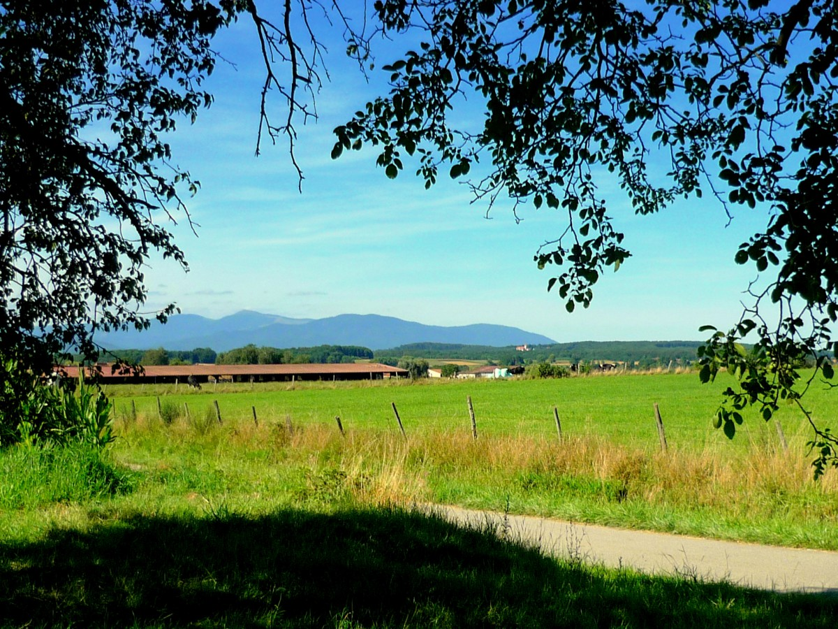 Sundgau near Dannemarie © French Moments