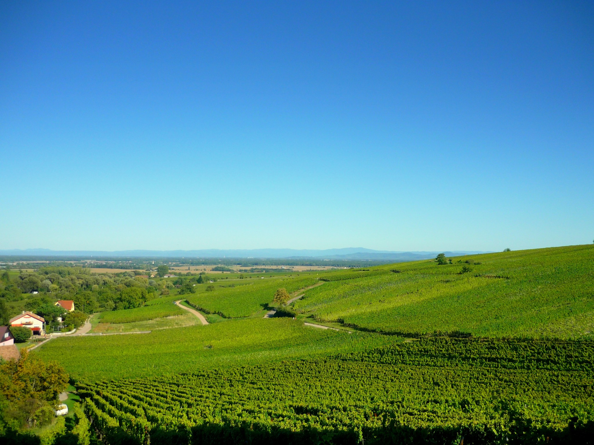 The vineyards of Hunawihr © French Moments