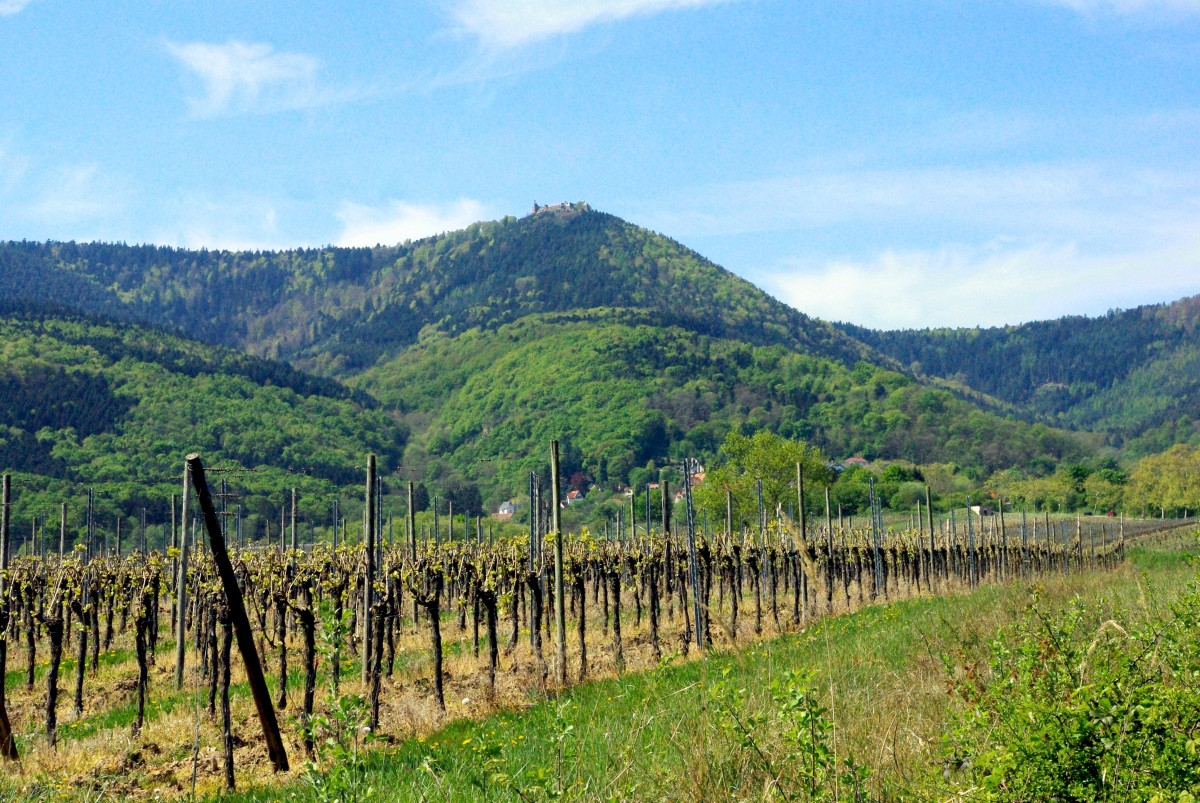 Mont Saint-Odile seen from the vineyards © French Moments