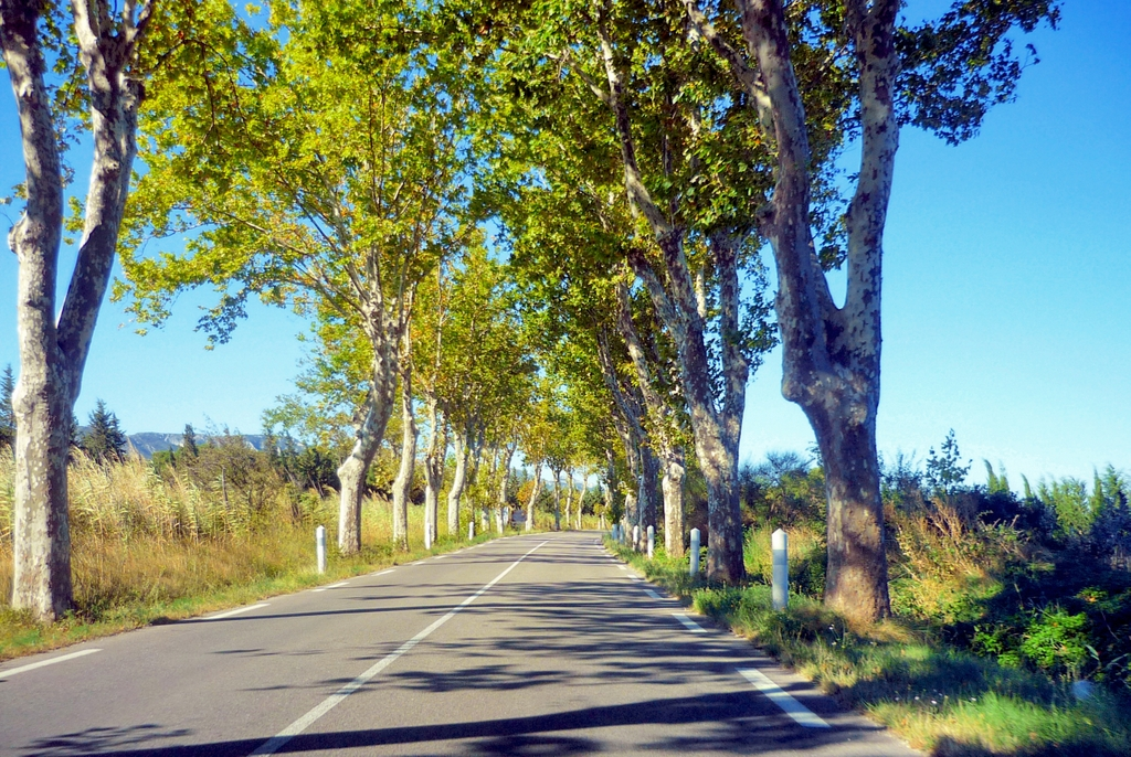 French Countryside: D99 road leading to Saint-Rémy-de-Provence © French Moments