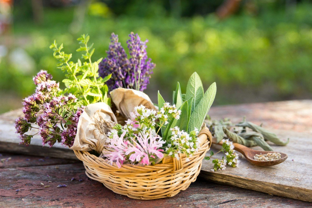 Provençal herbs - Stock Photos from Maria Medvedeva - Shutterstock