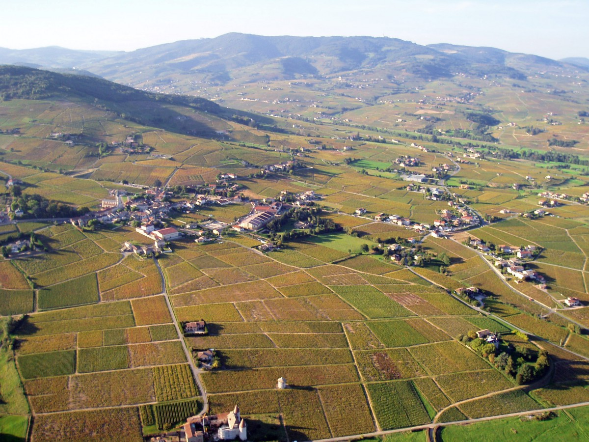 The vineyards of Quincié in the Beaujolais © Pascal - licence [CC BY-SA 3.0] from Wikimedia Commons