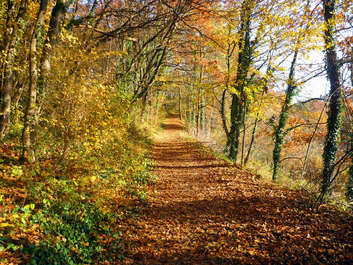 Autumn in France - in Alsace © French Moments