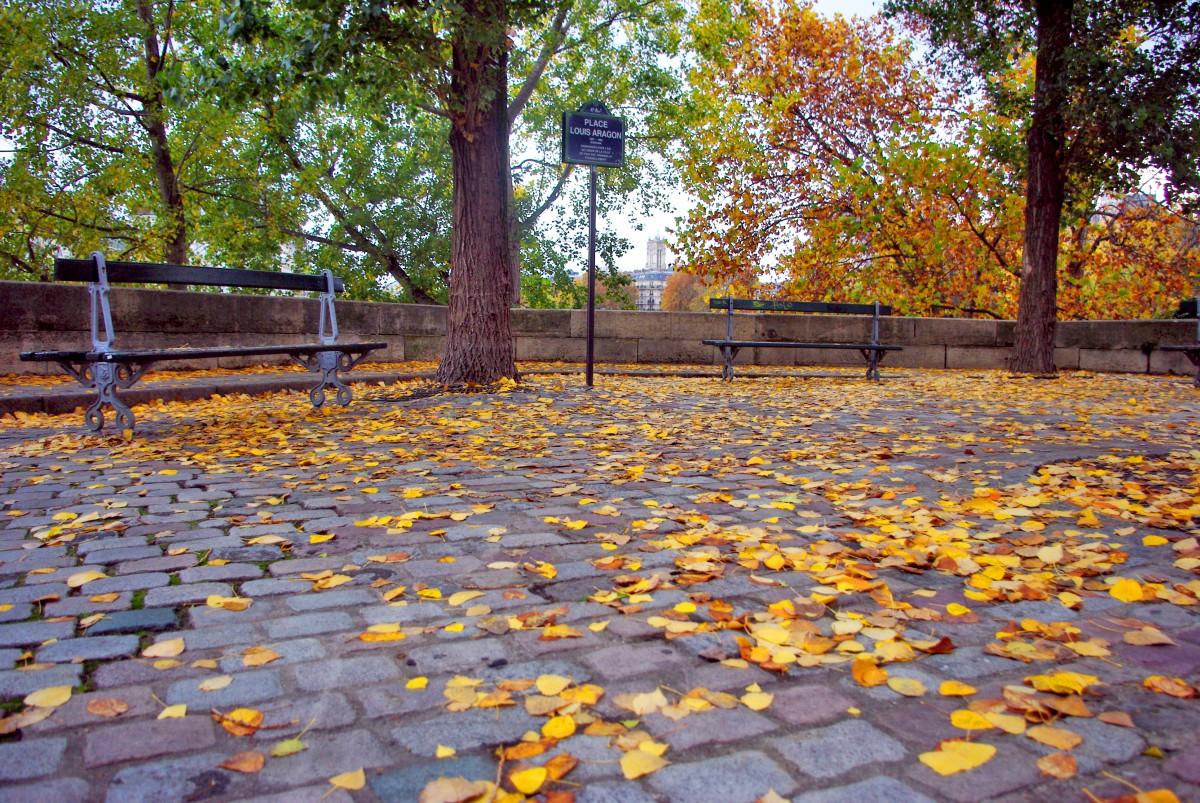 Ile Saint-Louis in Autumn, Paris © French Moments