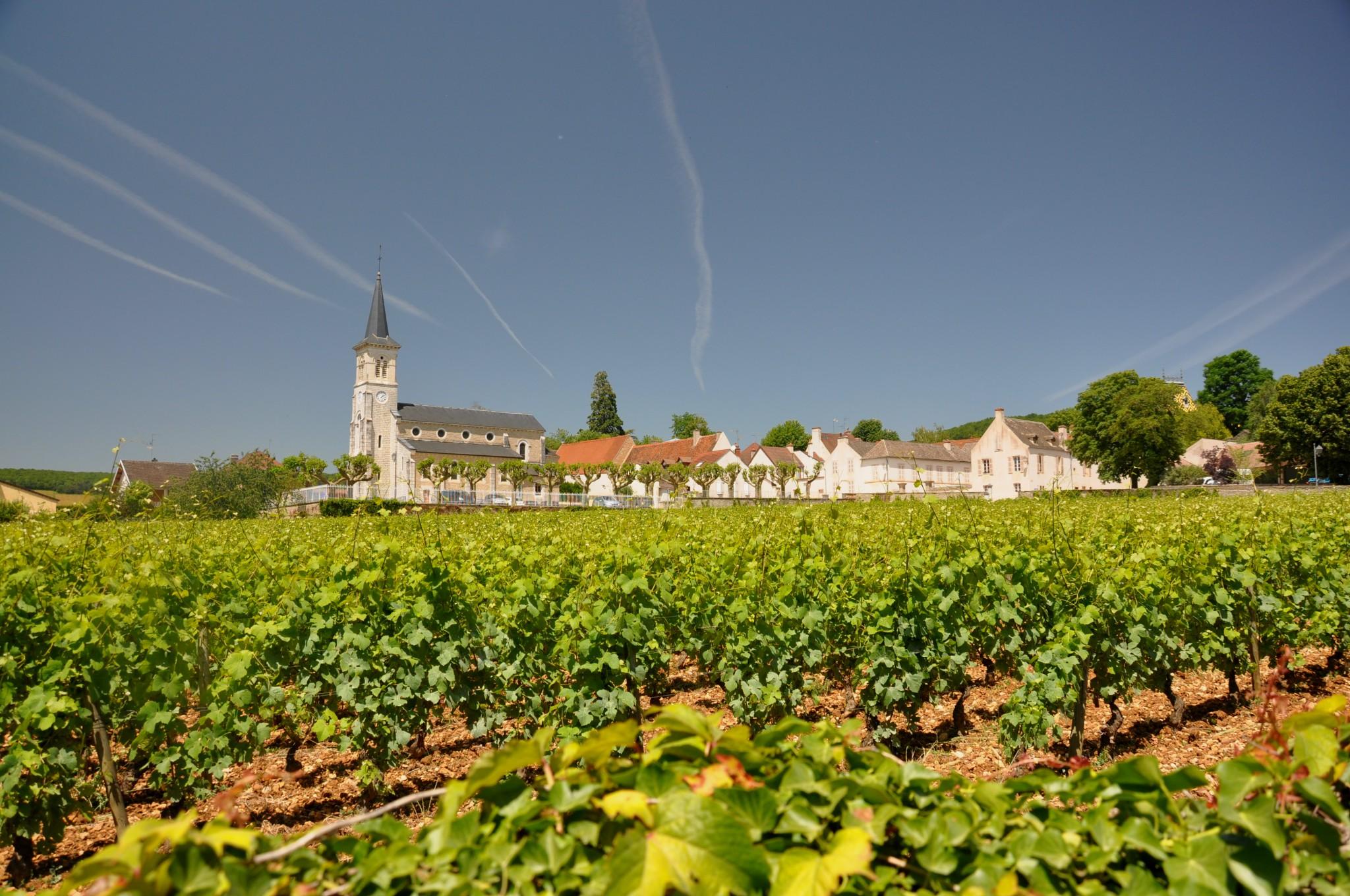 Wine lovers' tips: Vineyards of Aloxe Corton © Palauenc05- licence [CC BY-SA 3