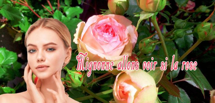Mignonne allons voir si la rose - Pierre de Ronsard © French Moments