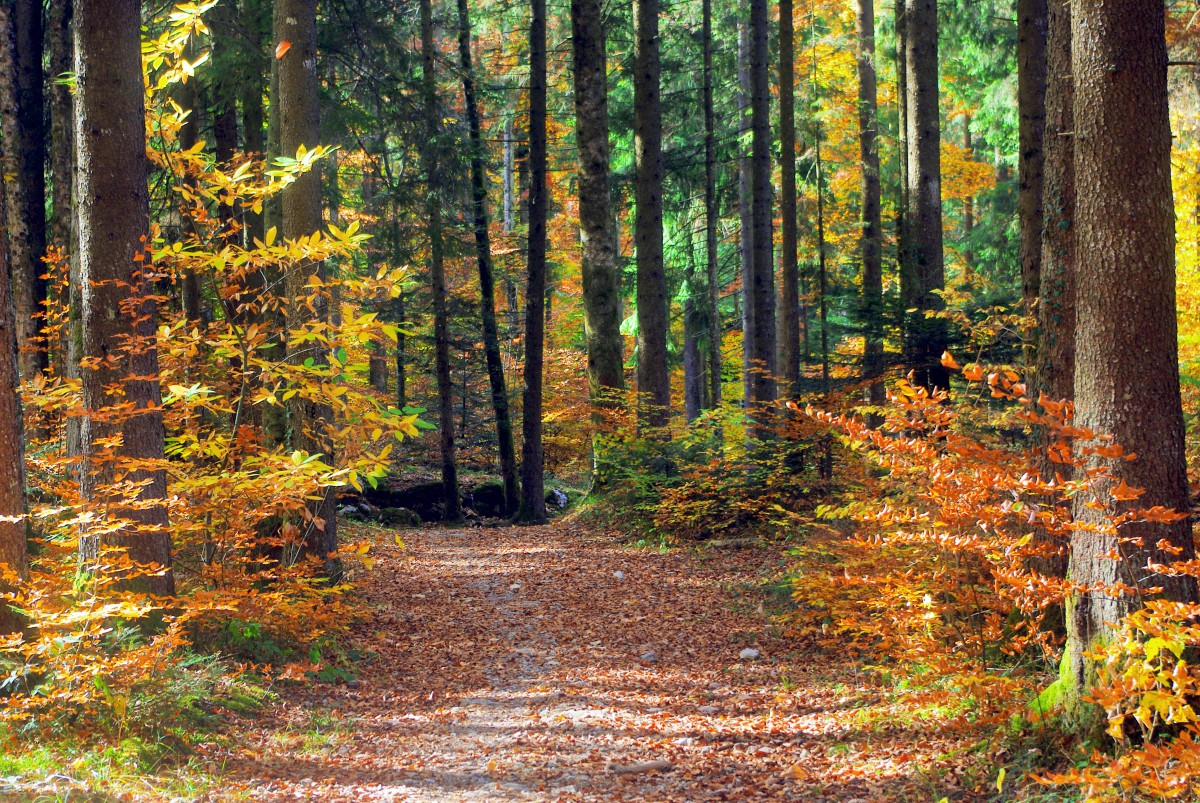 Autumn in the Semnoz © French Moments
