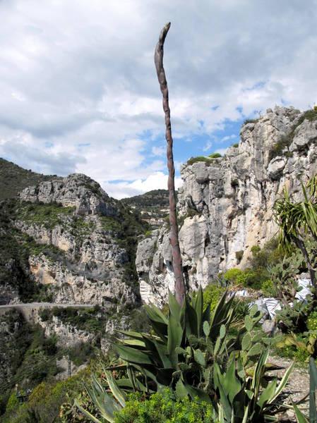 Eze Exotic Garden Agave salmiana by Tangopaso (Public Domain)