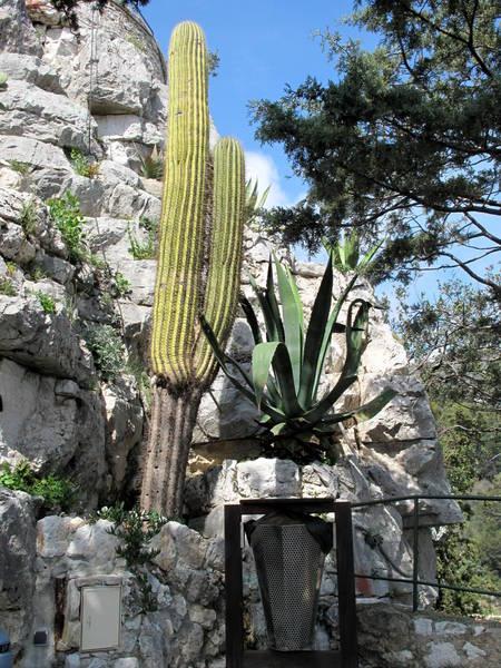 Eze Exotic Garden Trichocereus pasacana by Tangopaso (Public Domain)