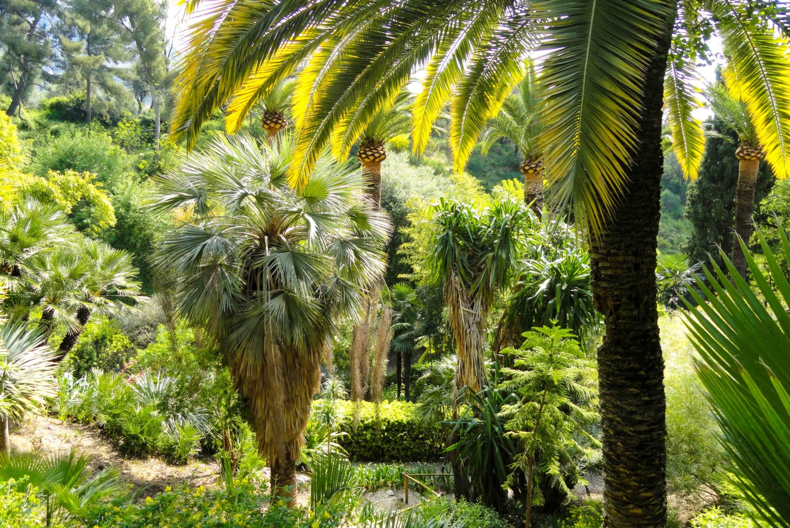 Menton's Parks and Gardens - Val Rahmeh. Photo: Daderot (Public Domain)