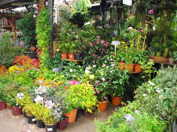 Queen Elizabeth II Flower Market © French Moments