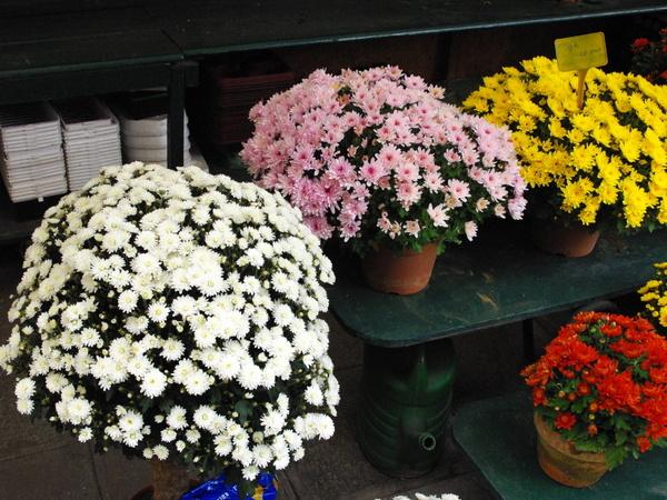 Marché aux fleurs - Flower Market, Paris © French Moments
