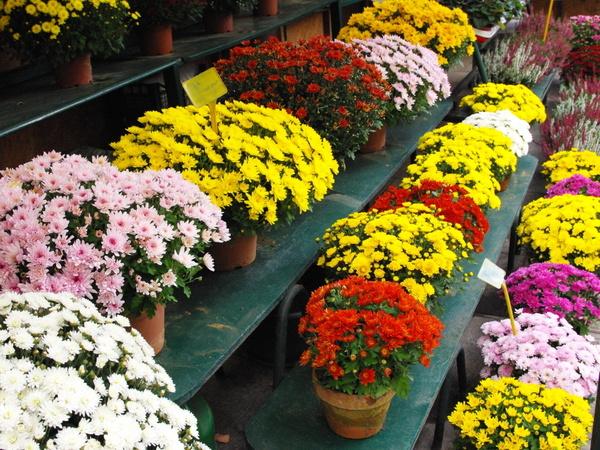 Marché aux fleurs Reine Elizabeth II 08 © French Moments