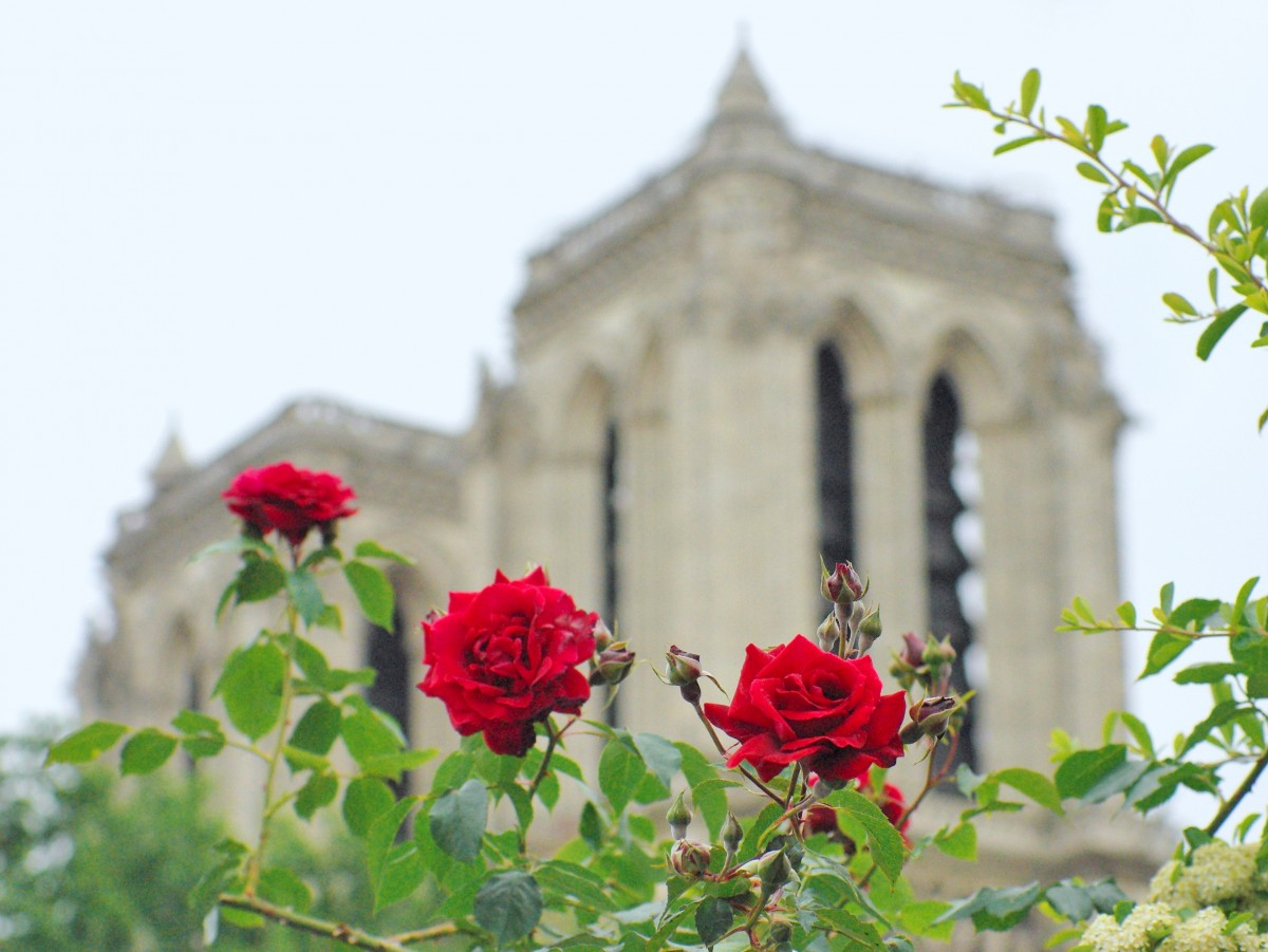 Notre-Dame cathedral and roses © French Moments