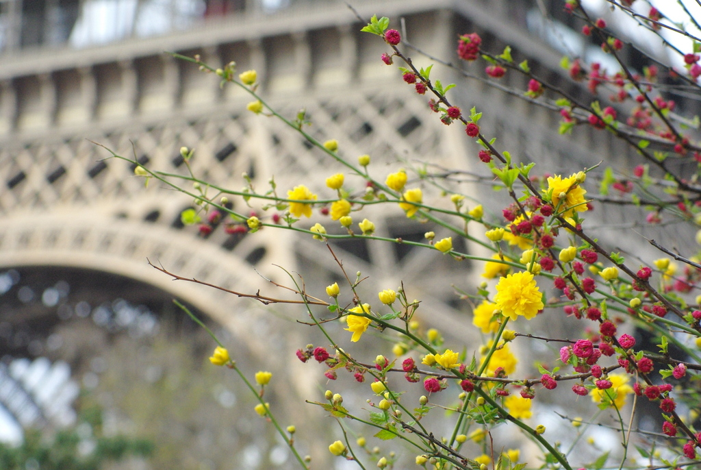 Spring at the Eiffel Tower 20 copyright French Moments