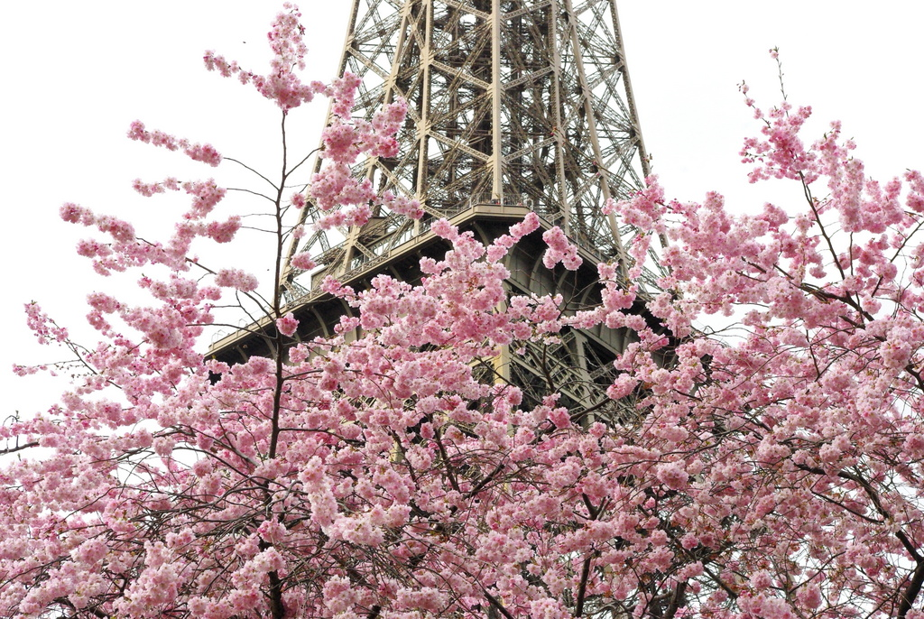 Spring at the Eiffel Tower 23 copyright French Moments