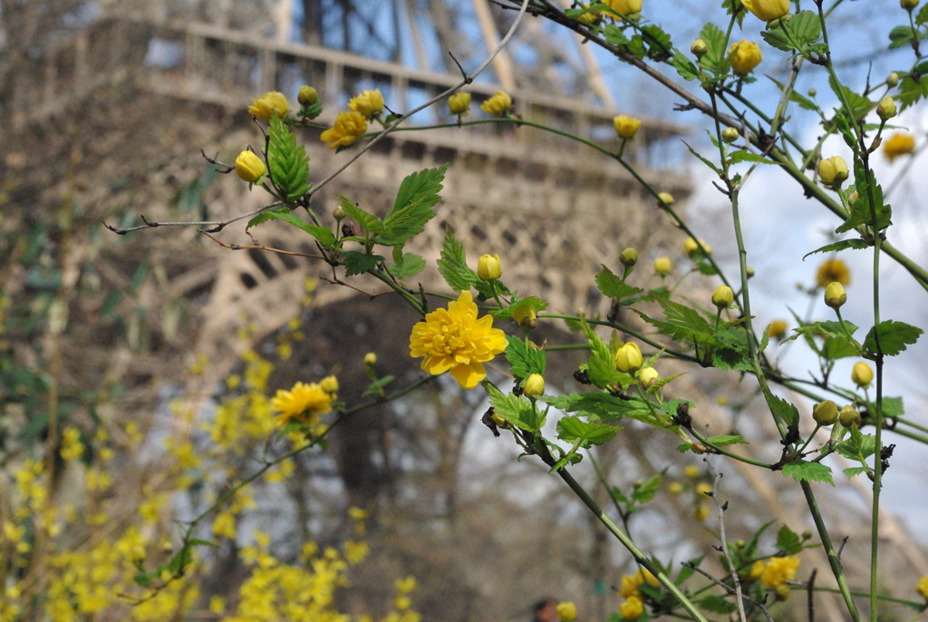 Spring at the Eiffel Tower 13 copyright French Moments