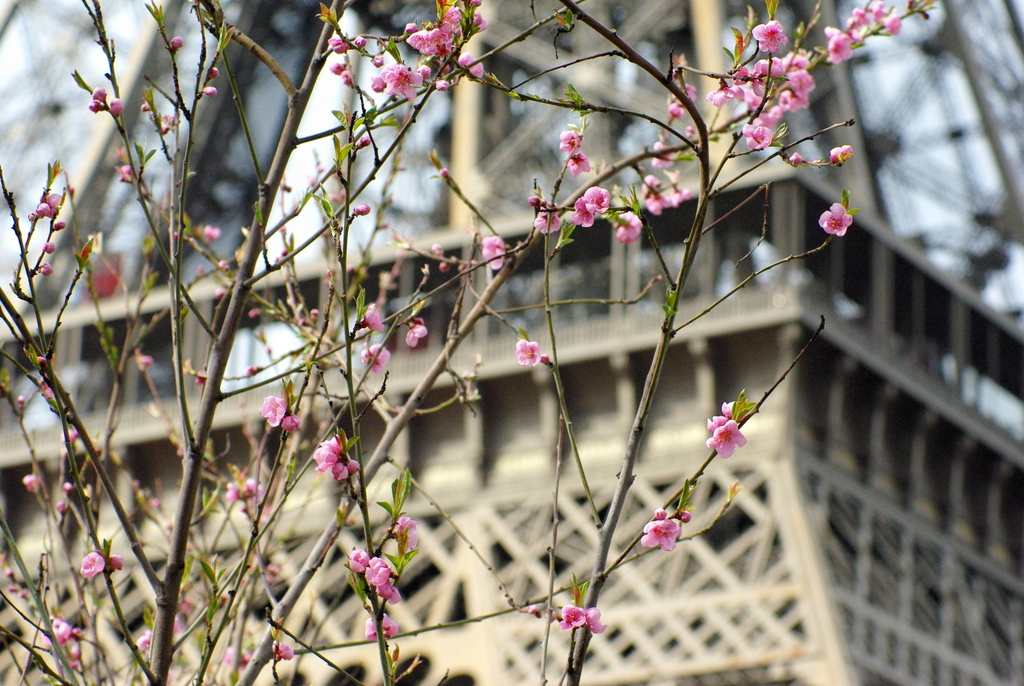 Spring at the Eiffel Tower 18 copyright French Moments