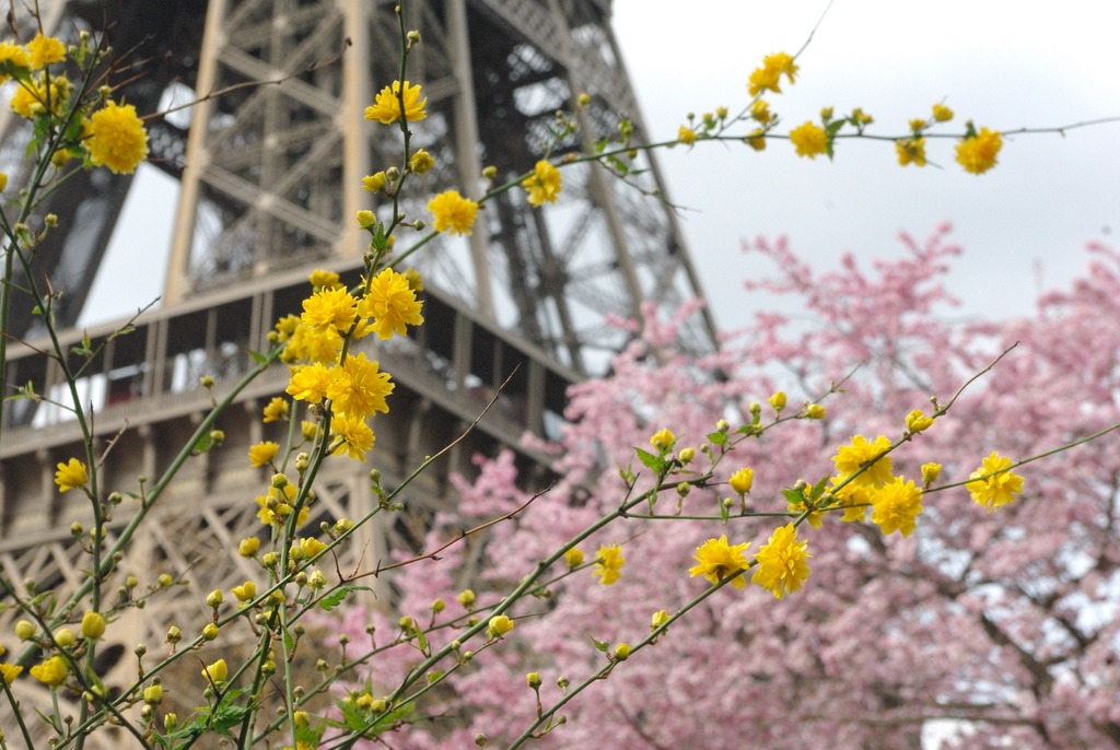 Spring at the Eiffel Tower 22 copyright French Moments