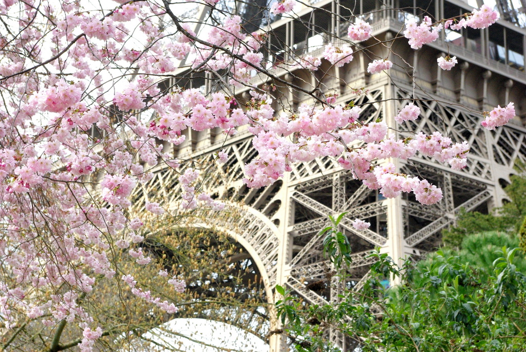 Spring at the Eiffel Tower 24 copyright French Moments