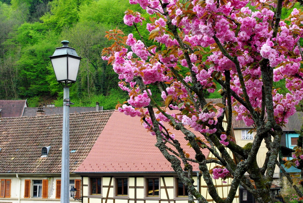Spring in Ferrette © French Moments