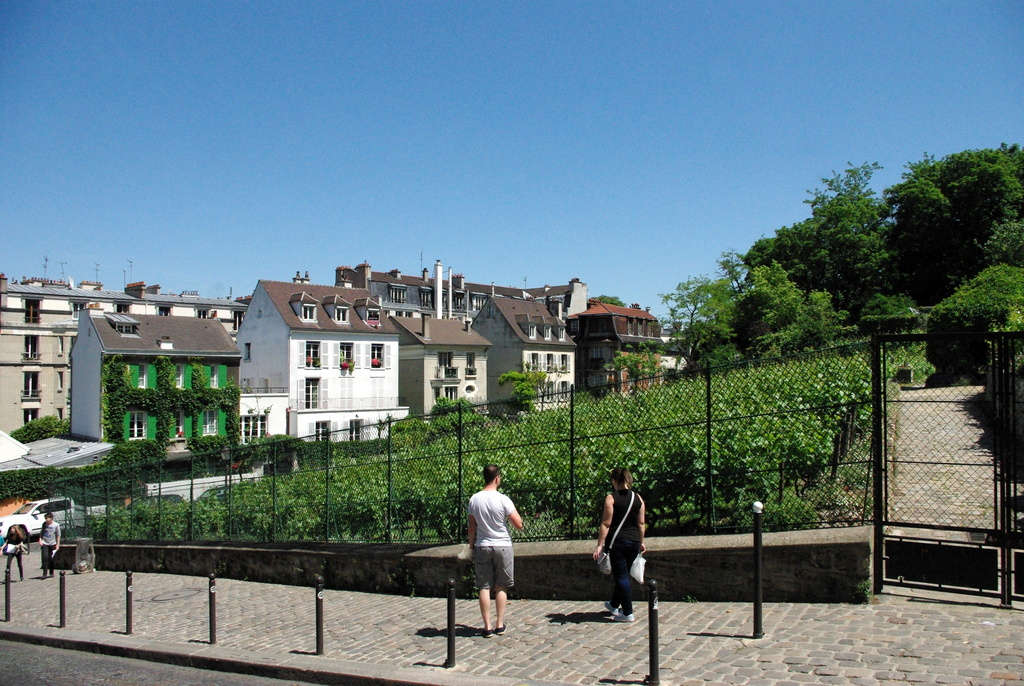 The vineyard of Montmartre © French Moments