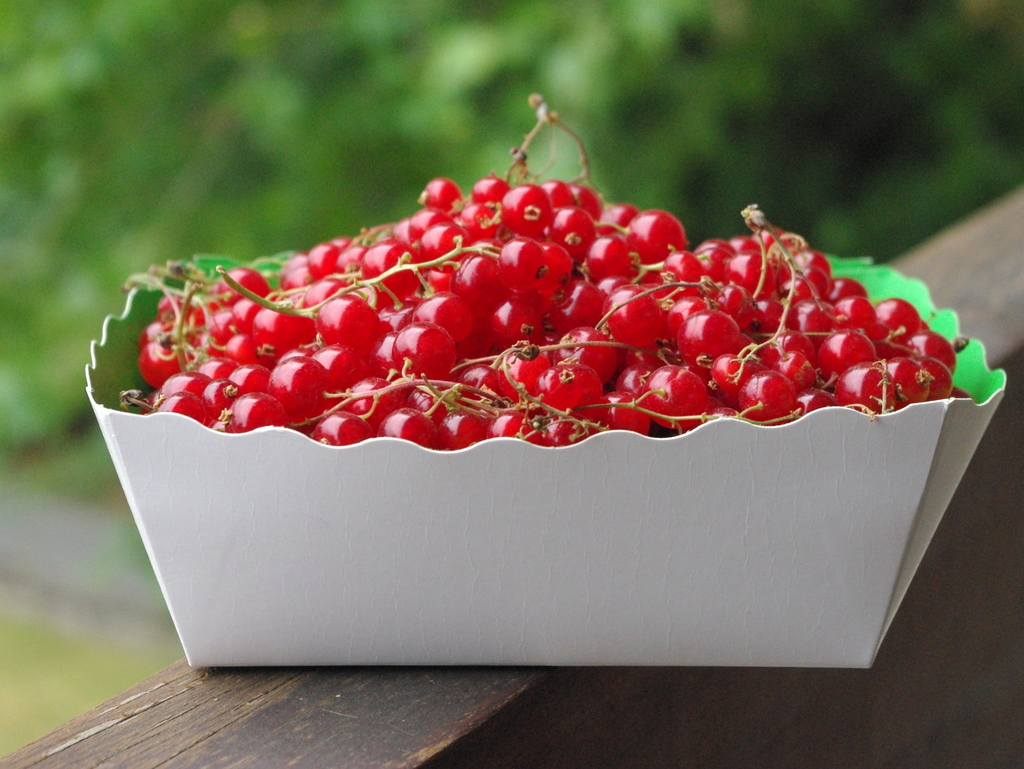 Redcurrants © French Moments