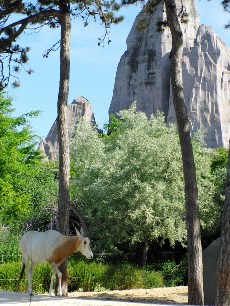 Paris Zoo © French Moments