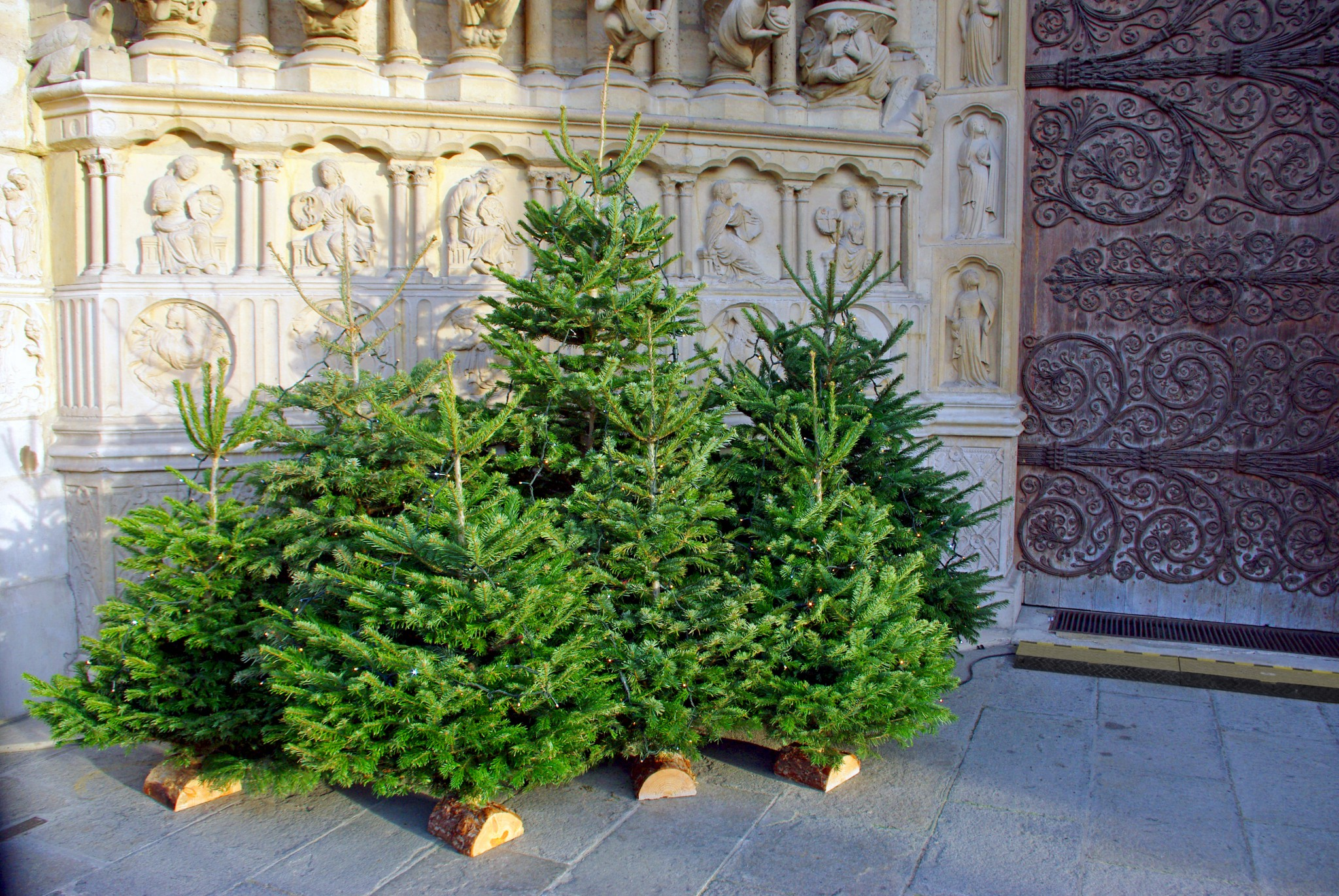 Simple Christmas trees under the central portal of Notre-Dame © French moments
