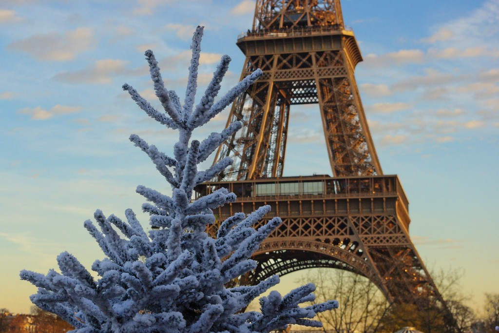 White Christmas Tree and Eiffel Tower © French Moments