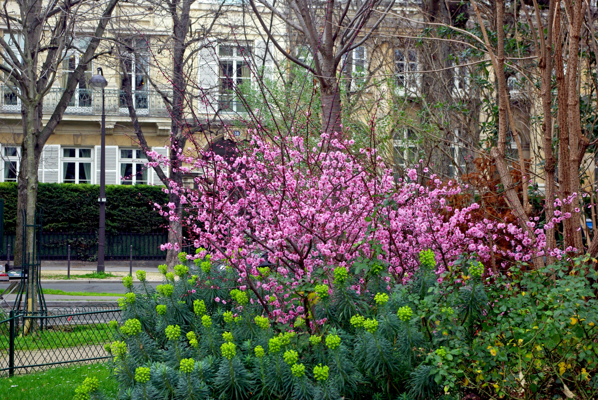Spring in February in Paris - Jardins des Champs-Elysees 01 © French Moments