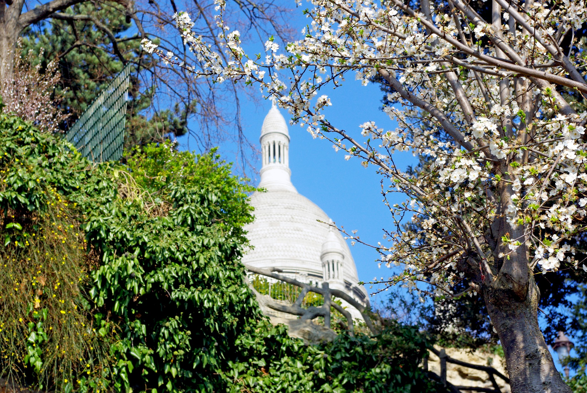 Tree in bloom in Square Louise Michel in Montmartre with the white dome of Sacré-Cœur in the distance © French Moments