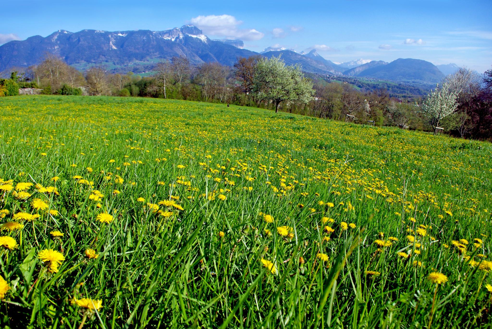 Field in Groisy Haute-Savoie © French Moments
