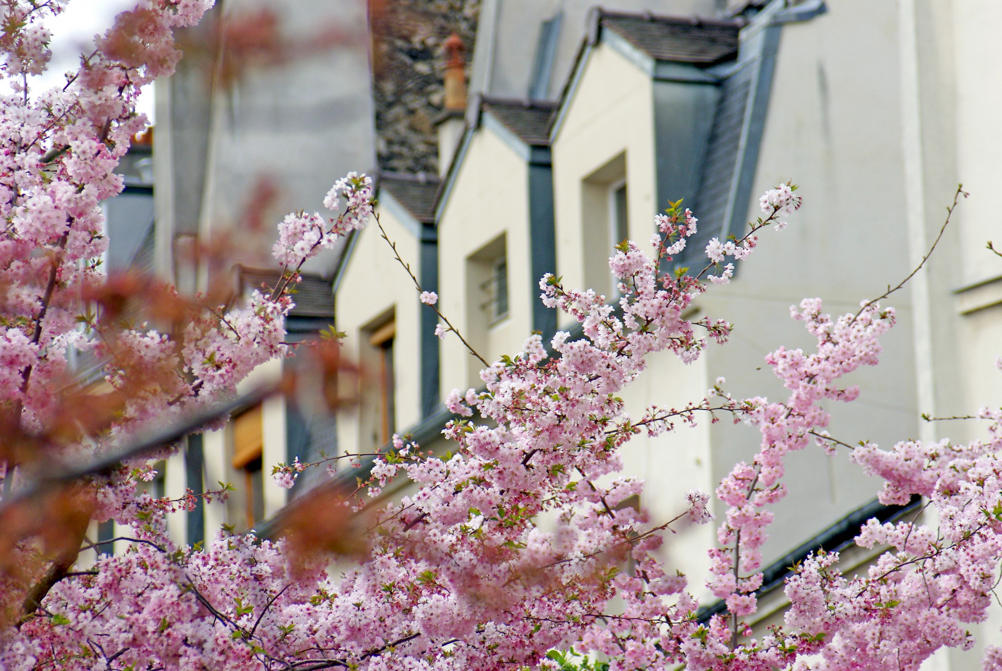Springtime in Jardin Anne Frank, 3rd arrondissement of Paris © French Moments