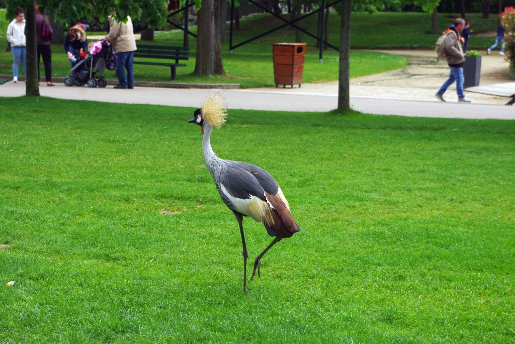 Do you know the name of this bird? At the Jardin d'Acclimatation © French Moments