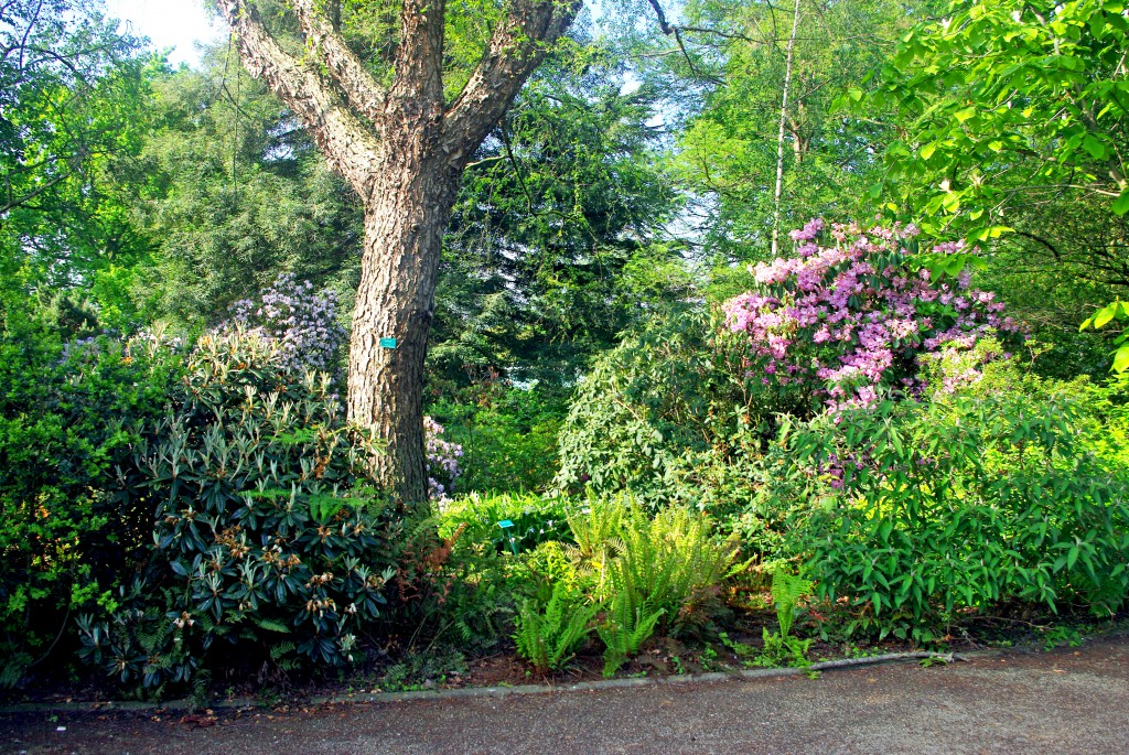 The English garden at the Jardin des Serres d'Auteuil © French Moments