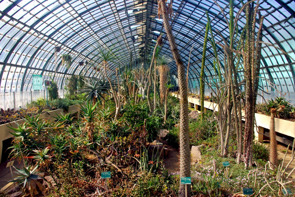 Cacti in a greenhouse, Jardin des Serres d'Auteuil © French Moments