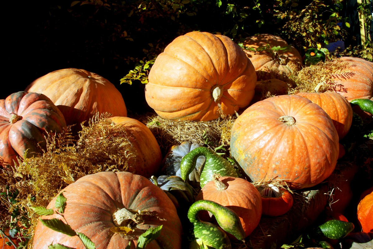 Autumn in France - pumpkins © French Moments