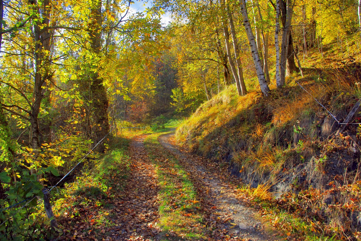 The woods near Côte d'Aime © French Moments