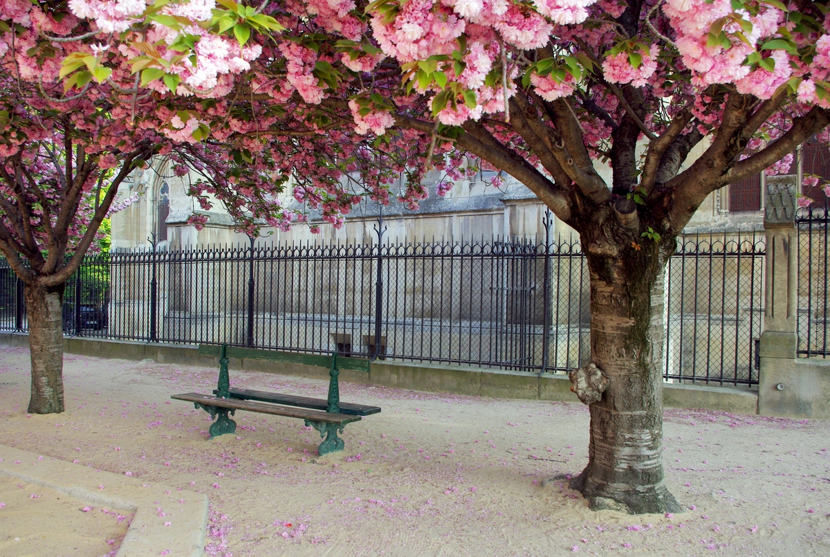 Parks and Gardens of Paris: Jean XXIII garden © French Moments