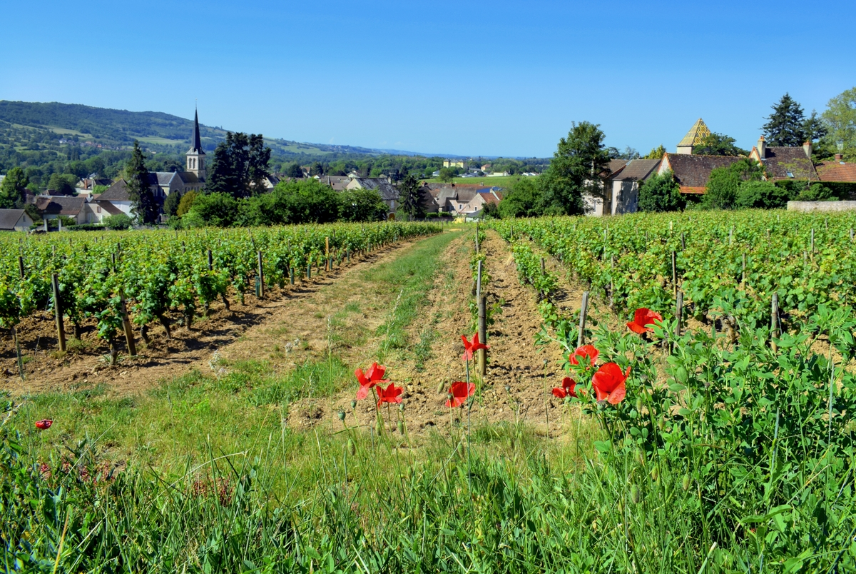 Santenay © French Moments