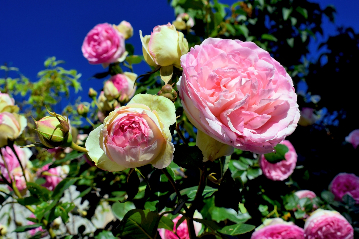 Mignonne allons voir si la rose - Santenay © French Moments