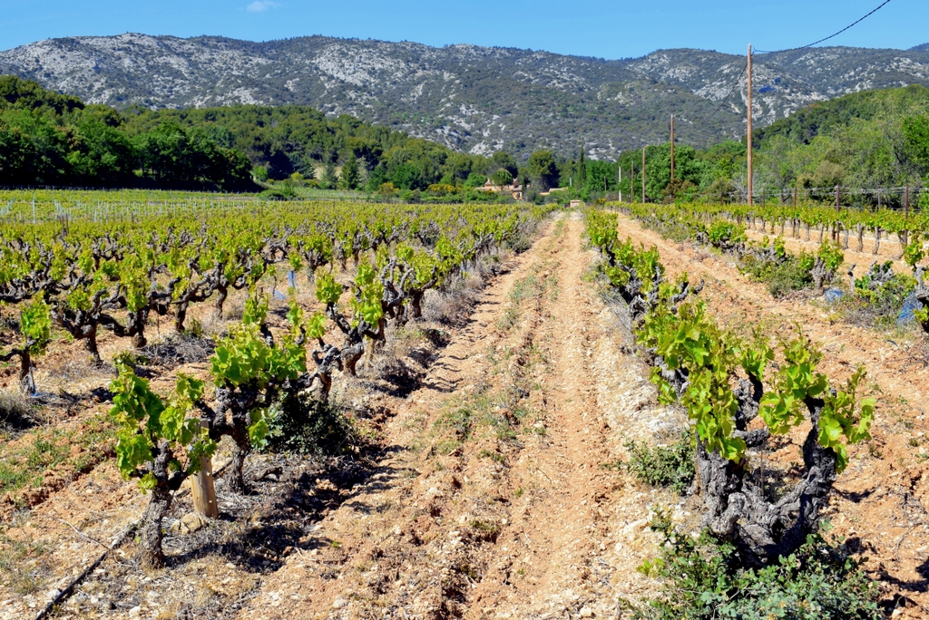 Vineyards near Bédoin, Provence © French Moments
