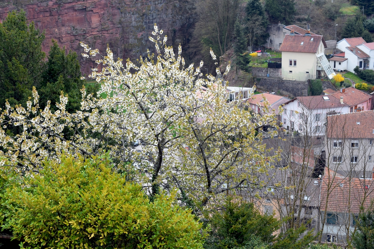 Photos of Spring in Lorraine - Epinal © French Moments