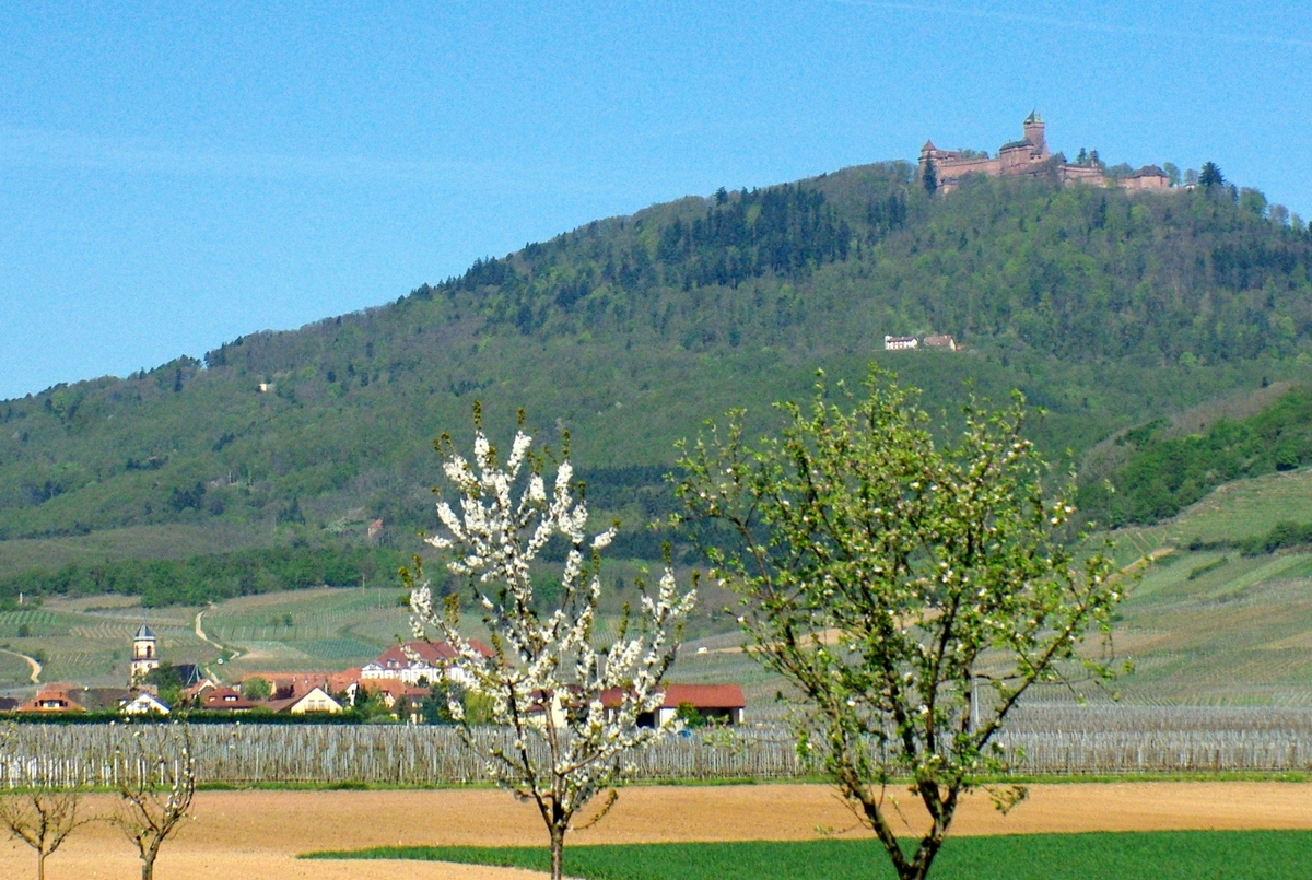 Photos of Spring in Alsace - Haut-Koenigsbourg © French Moments