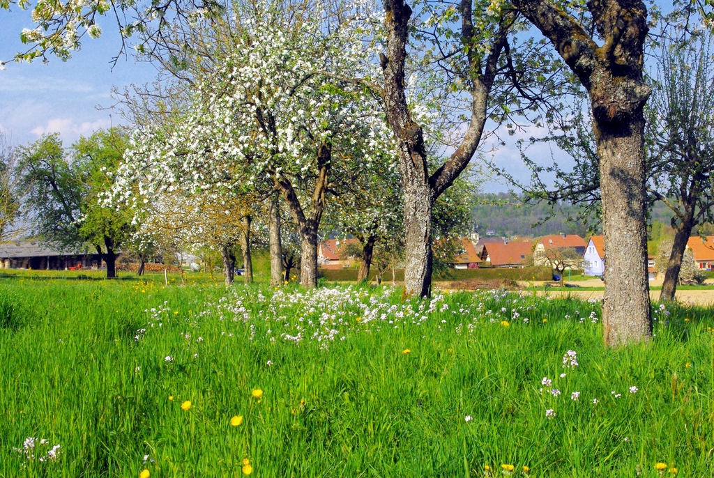 Photos of Spring in Alsace - Hirtzbach, Alsace © French Moments