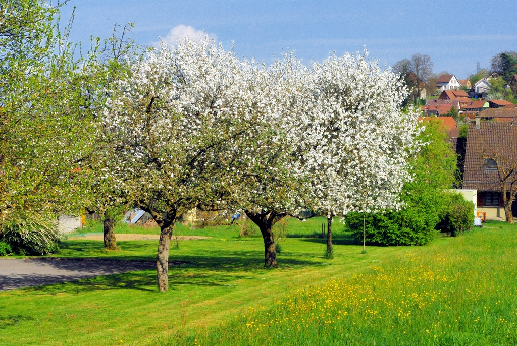 Photos of Spring in Alsace - Hirtzbach © French Moments